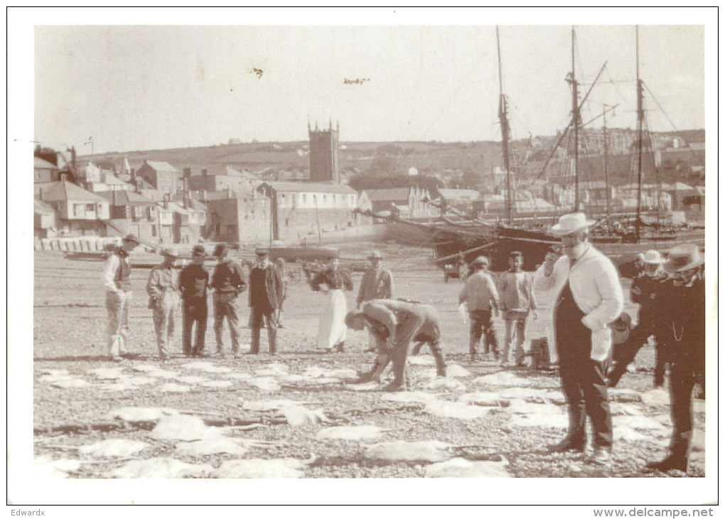 Fish Being Landed, St Ives, Cornwall, England Postcard Posted 1997 Stamp - St.Ives