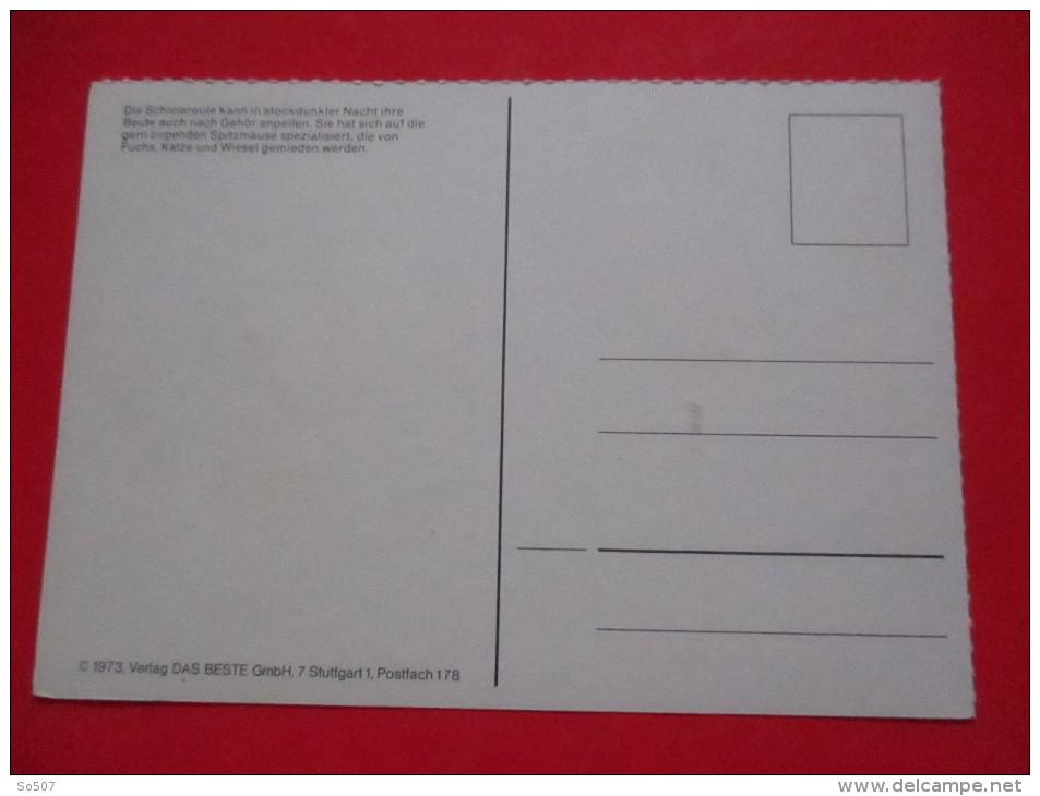 H4-Postcard-Barn Owl, Schleiereule -Tyto Alba - Oiseaux