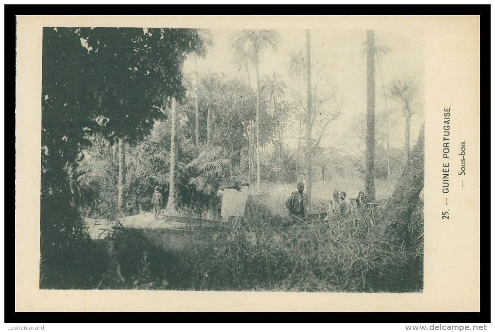 GUINÉ-BISSAU - Sous-bois ( Nº 25)  Carte PostalE - Guinea-Bissau