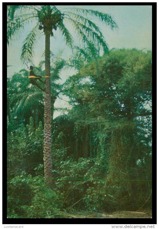 BUBAQUE- Paisagem De Bubaque ( Ed. Central De Informação E Turismo) Carte Postale - Guinea-Bissau