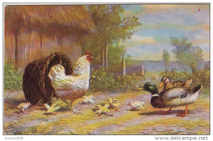 Coq Canard Poussins Animée, Colorisée Serie 223 - Animals