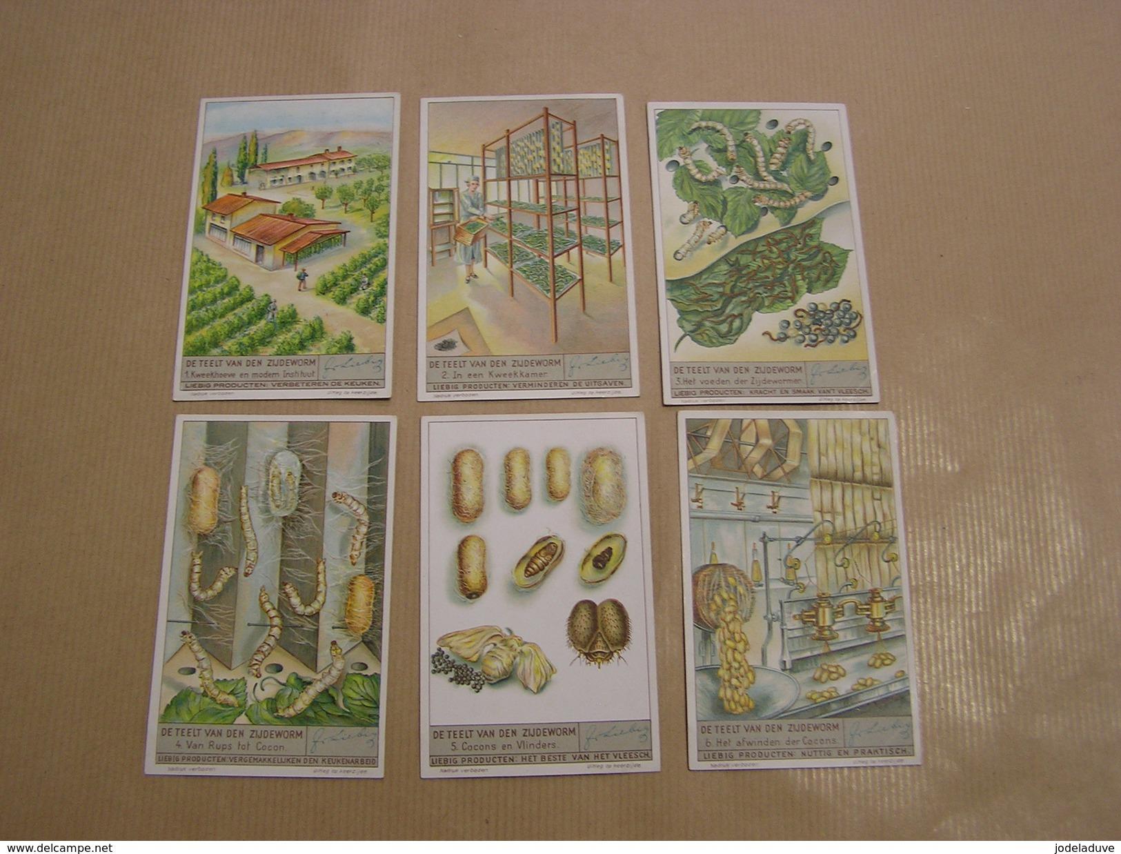 DE TEELT VAN DEN ZIJDEWORM Le Ver à Soie Liebig Série Reeks 6 Chromos Trading Cards Chromo - Liebig