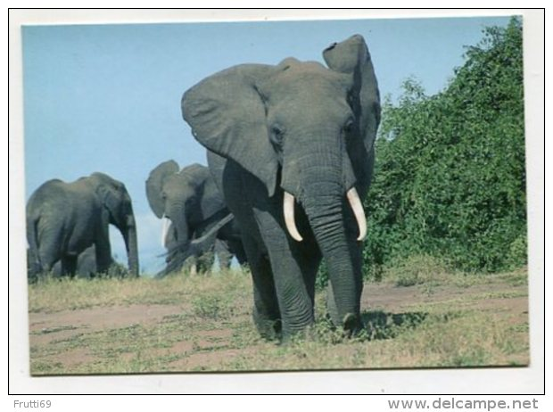 ANIMAL - AK286782 Zaire - Elephants - Parc National De La Virunga - Kivu - Elefanten