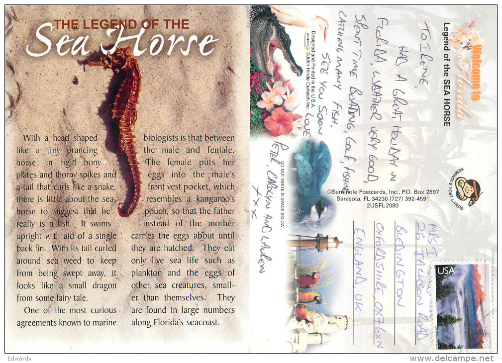 Sea Horse Shell, Florida, United States US Postcard Posted 2010 Stamp - Etats-Unis