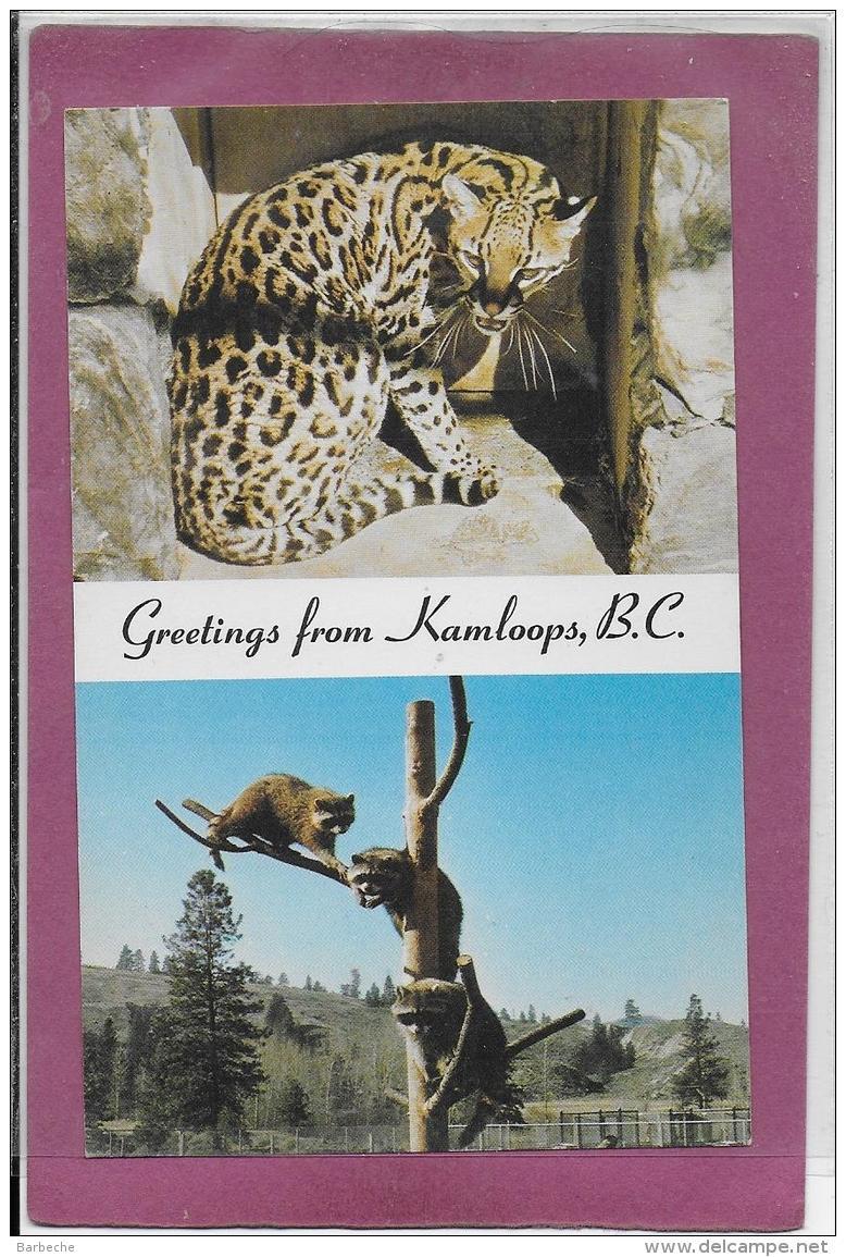 GREETINGS FROM KAMLOOPS, B.C. - Affen