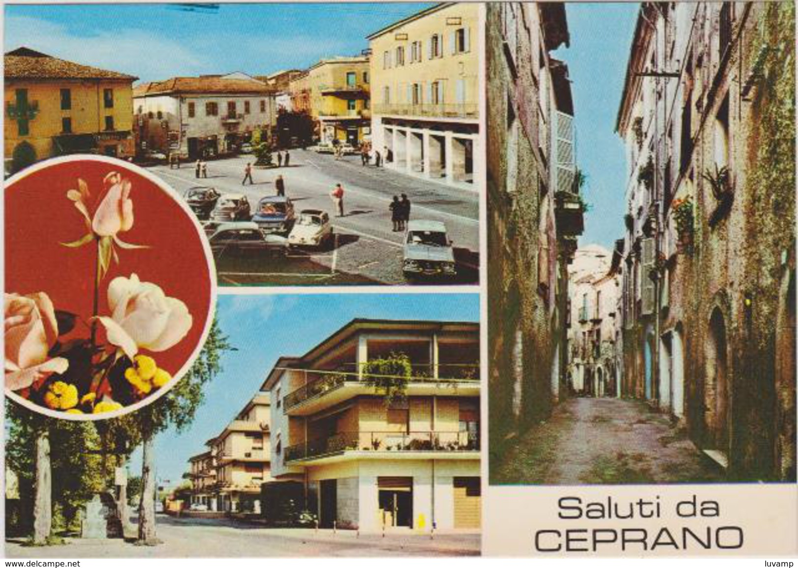 CEPRANO (FROSINONE) - F/G   COLORE (10814) - Altre Città