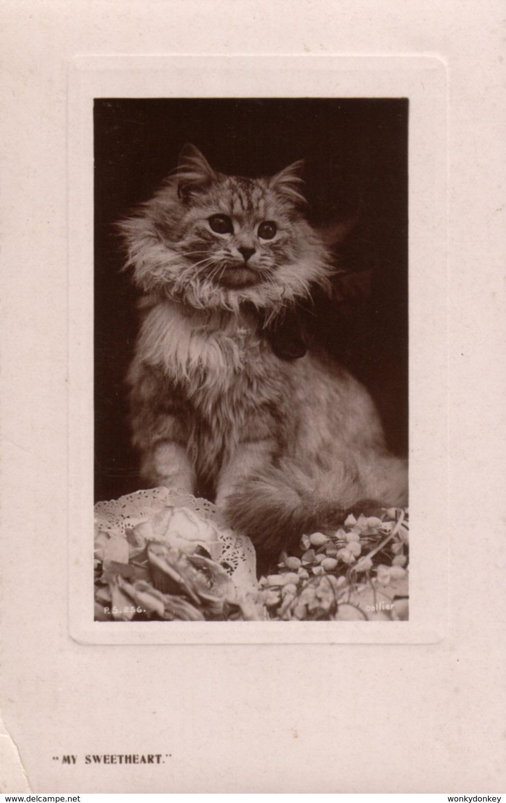Cat Card -  My Sweetheart.     Rapid Photo  Co  RPPC. - Katten
