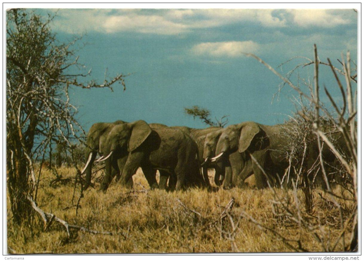 Tanzania National Park - Eléphants - Tanzania