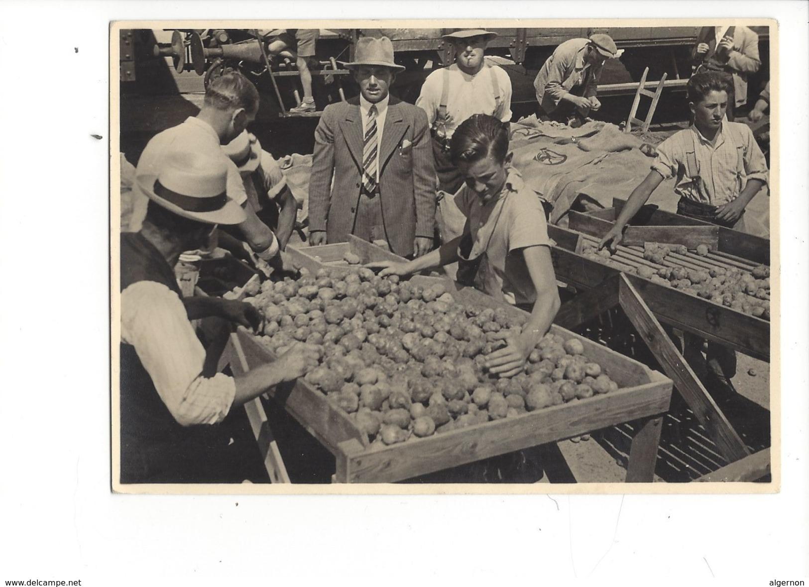 16210 - Les Ouvriers Au Travail Triage Des Pommes-de-terre (format 10X15) - Suisse