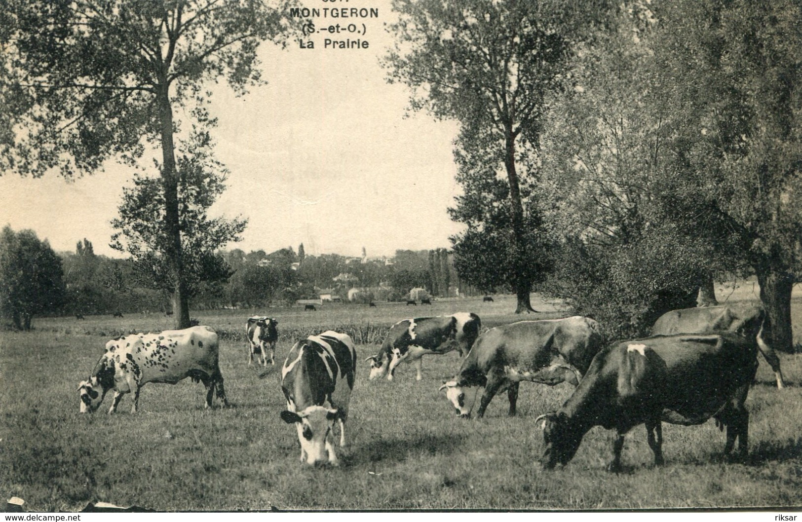 VACHE(MONTGERON) - Vaches