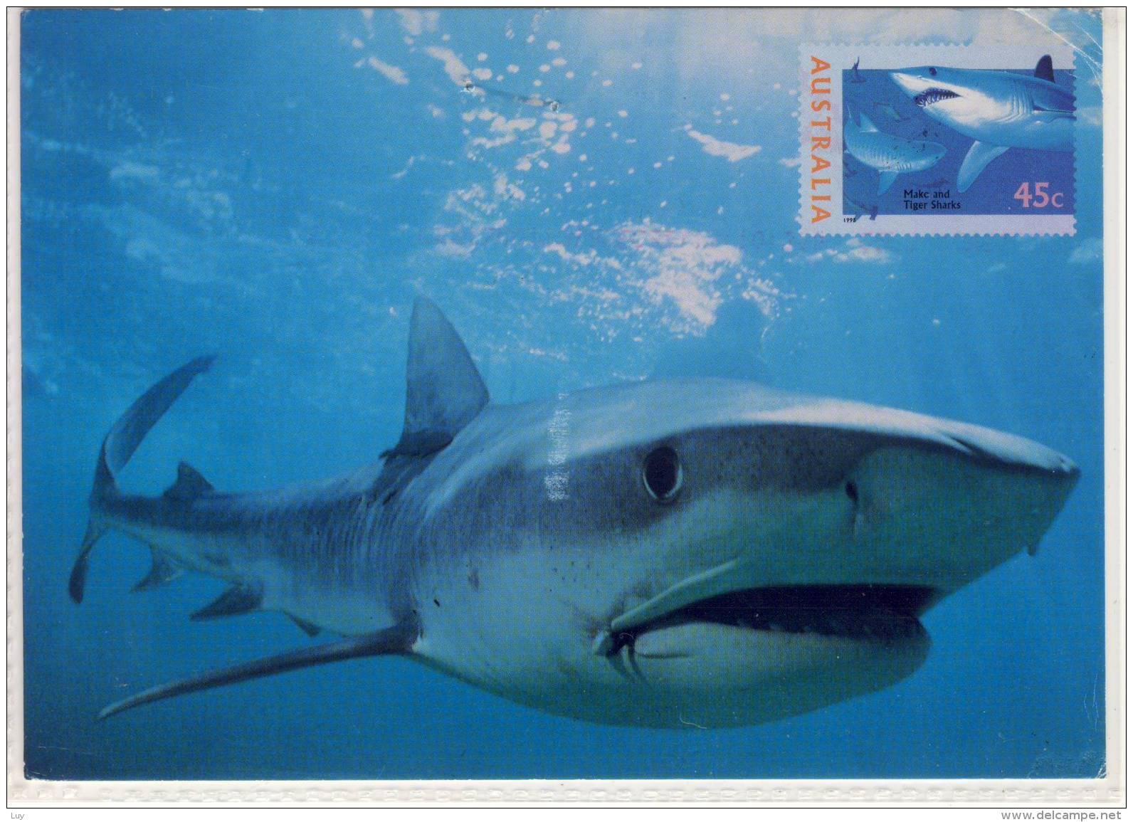 AUSTRALIA - TIGER SHARK, Maxi Card Galeocerdo Cuvier,  Pre-paid Postage - Unclassified