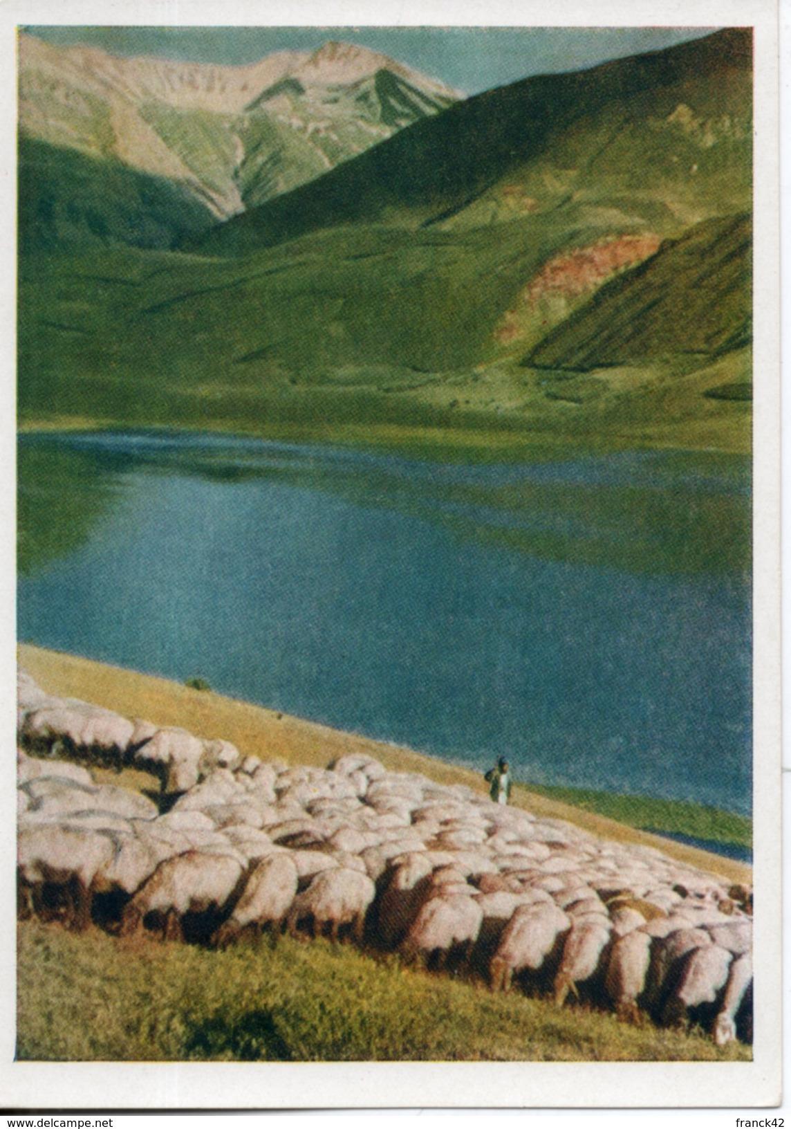 Tadjikistan.  Elevage De Moutons. Grand Format. - Tadjikistan