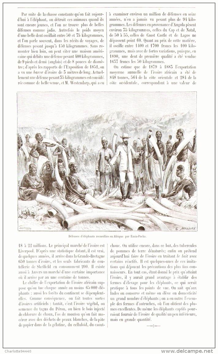 L'IVOIRE EN AFRIQUE    1892 - Minéraux & Fossiles