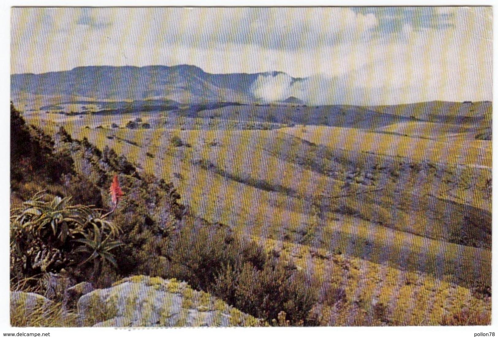 ZIMBABWE - RODESIA - RHODESIA - INYANGA LANDSCAPE - A VIEW OF INYANGANI - MOUNTAIN FROM NYANGWE FORT - 1971 - Vedi Retro - Zimbabwe