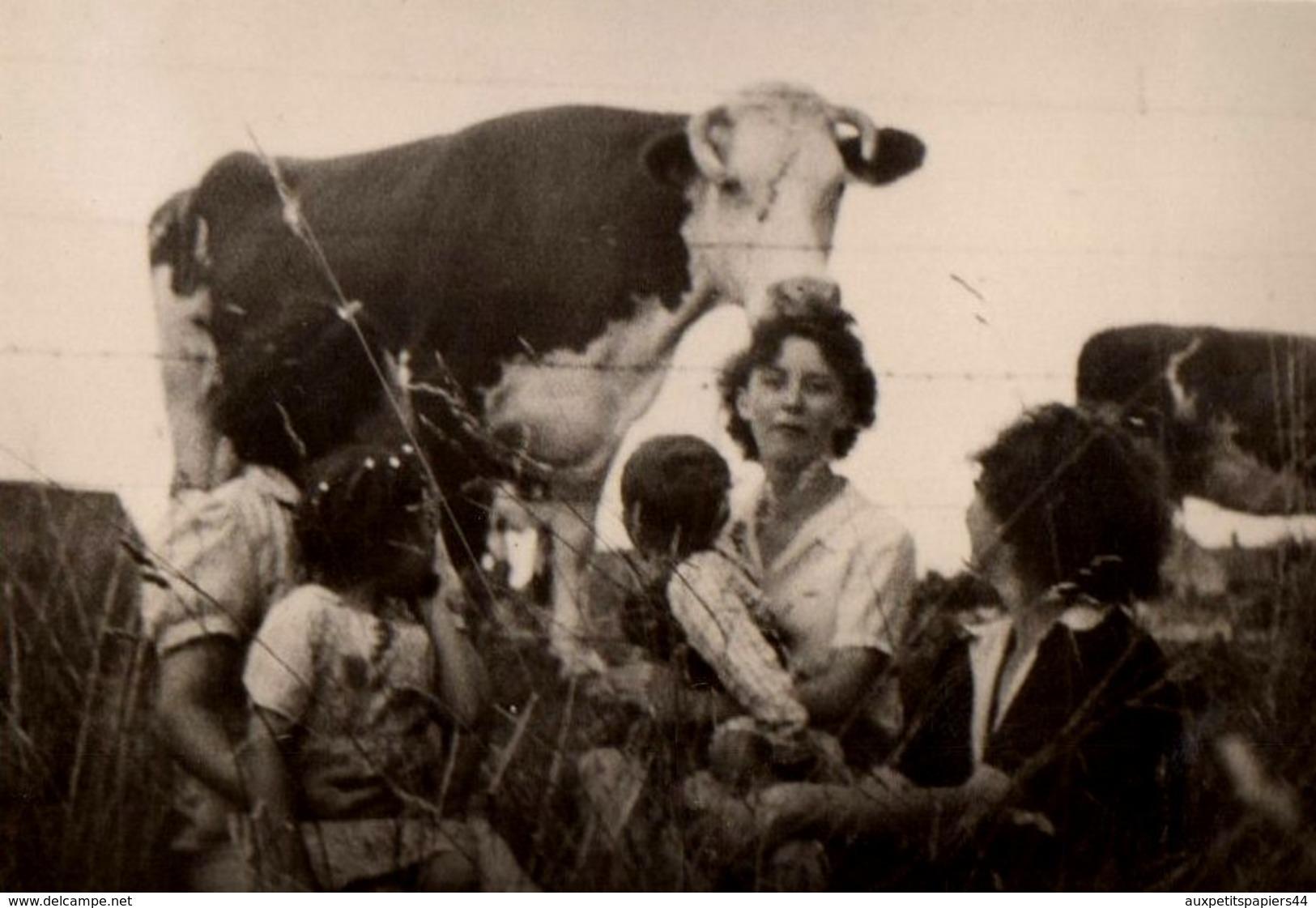 Anonymous persons impressionnante photo originale vache noire p rilleuse photo de famille - Photo de famille originale ...