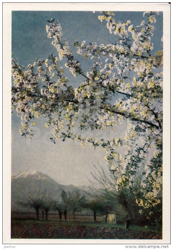Spring In The Pamirs - 1961 - Tajikistan USSR - Unused - Tadjikistan