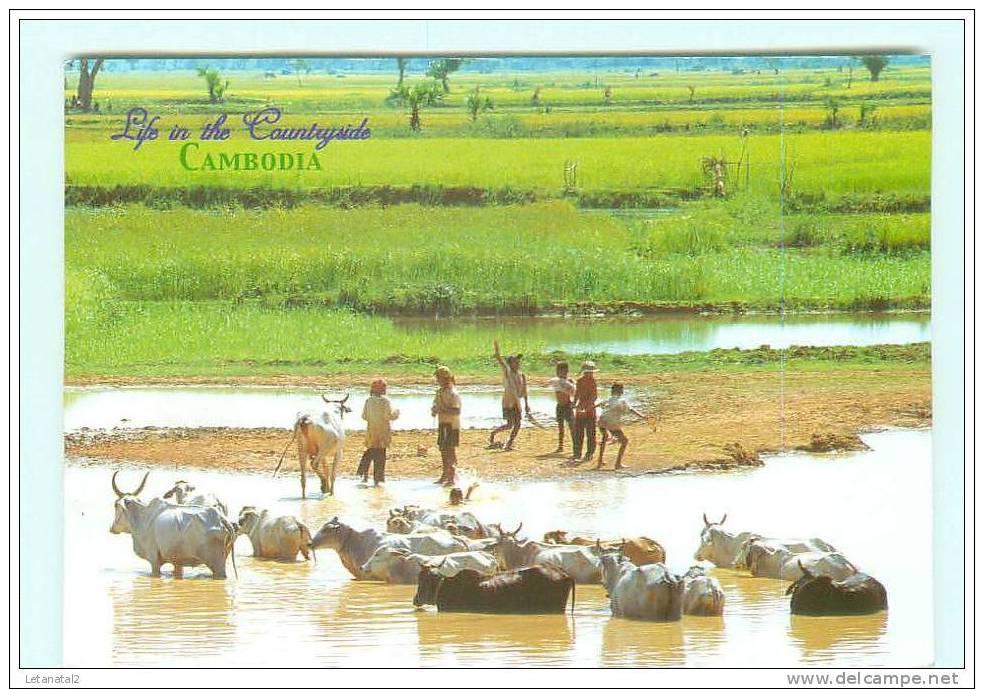Countryside , élevage - Cambodia