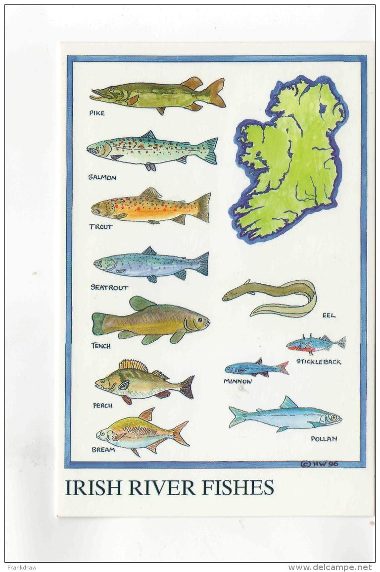Postcard - Map - Irish River Fishes - No Card No New - Postcards
