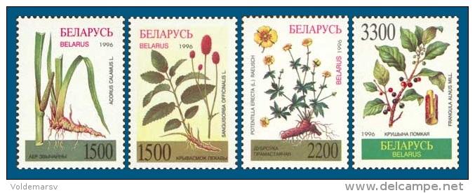 Belarus 1996 Mih. 158/61 Flora. Medicinal Plants MNH ** - Belarus