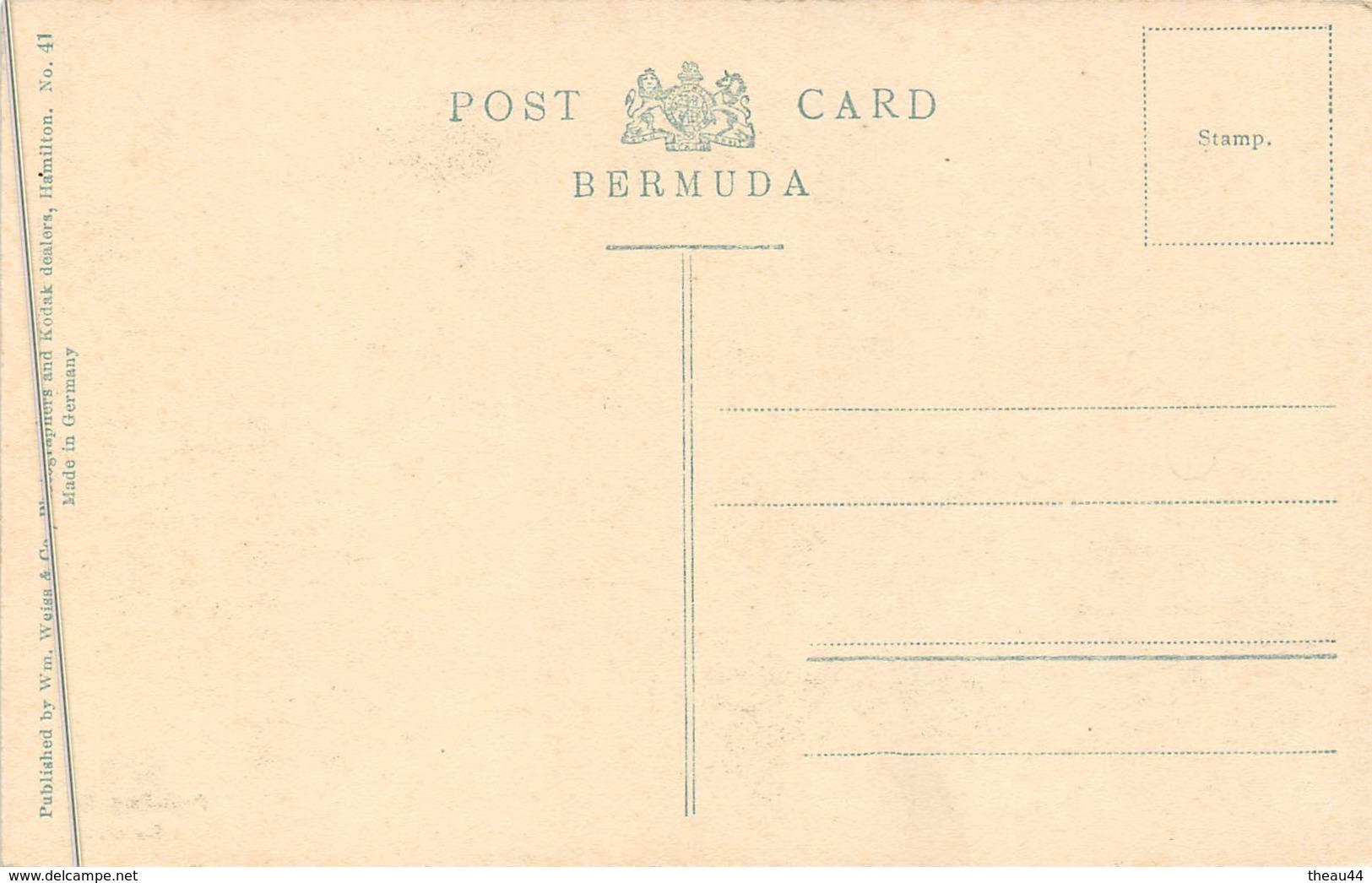 ¤¤   -  BERMUDES   -  Paw-Paw Trees  -  BERMUDA - Bermudes