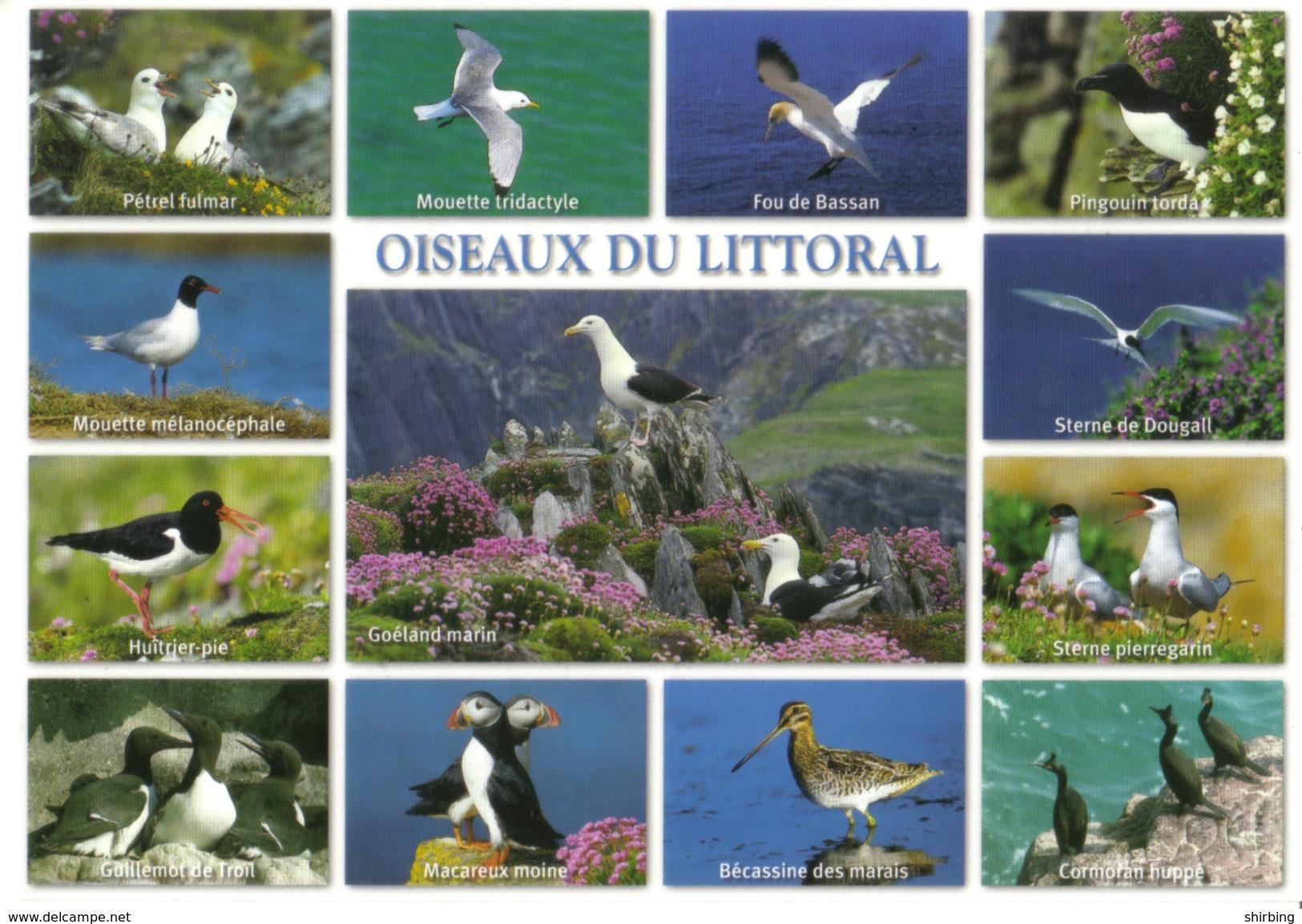 20h :France Eagle, Hawk, Buzard Stamp Used On Bird Postcard - France