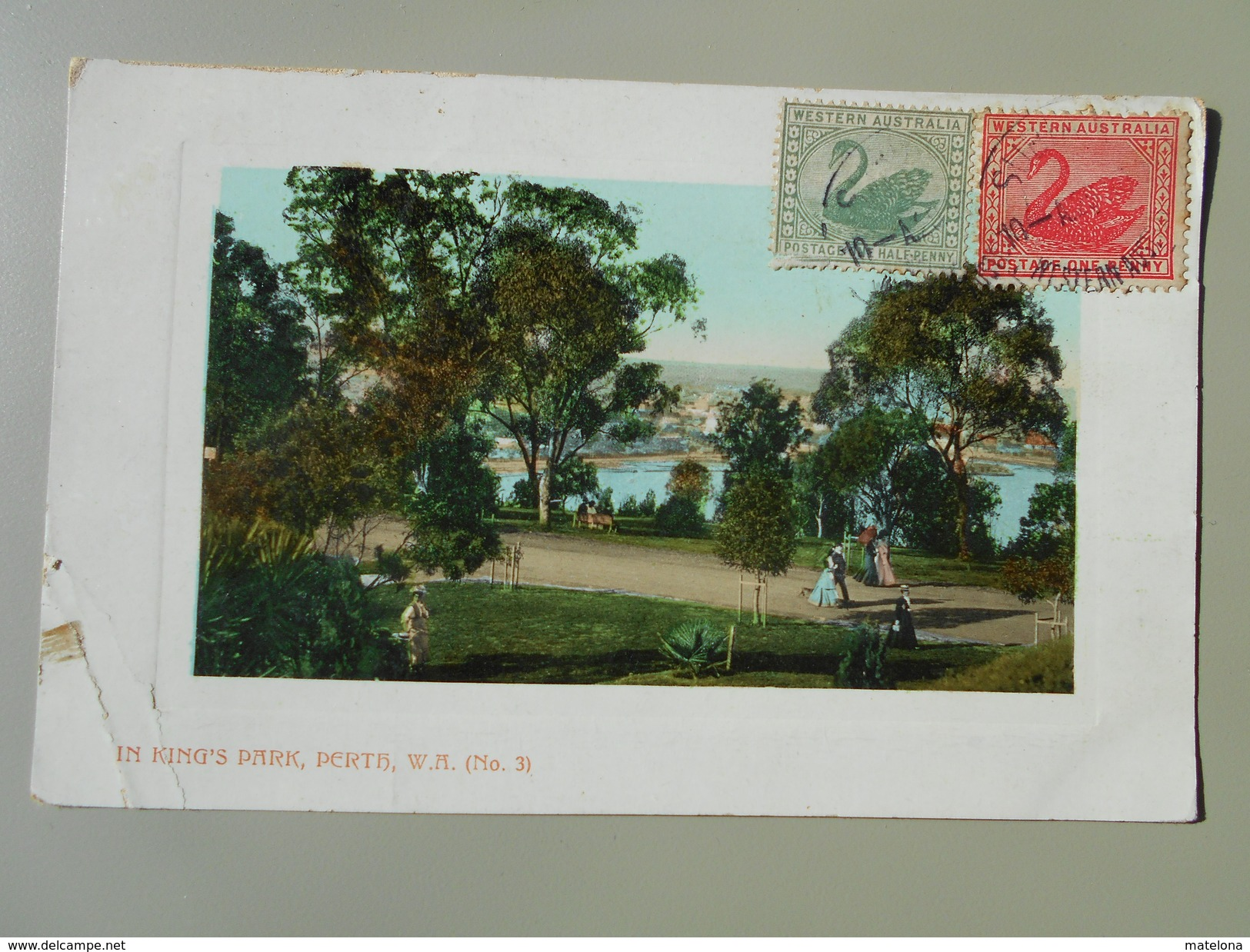 AUSTRALIE WESTERN AUSTRALIA PERTH IN KING'S PARK No 3 - Perth