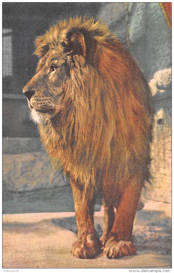 CPA - Illustration Lion - Lions
