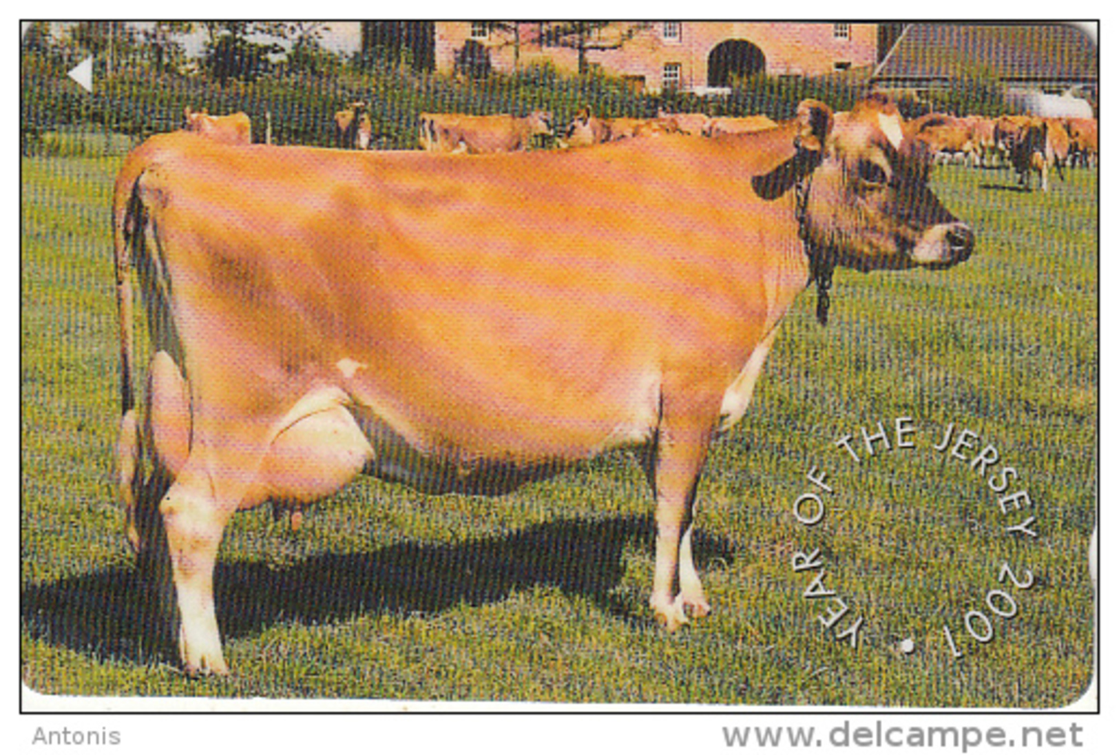 JERSEY ISL. - Cow, Year Of The Jersey 2001, CN : 90JERA(normal 0), Used - United Kingdom