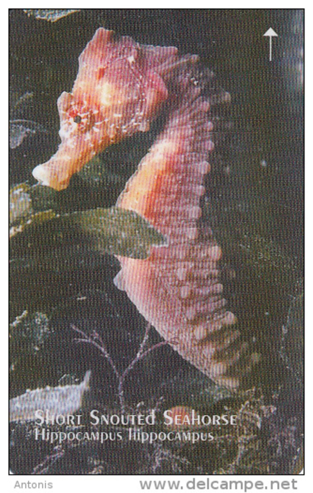 JERSEY ISL. - Year Of The Ocean/Short Snouted Seahorse, CN : 65JERA(normal 0), Tirage %25000, Used - United Kingdom