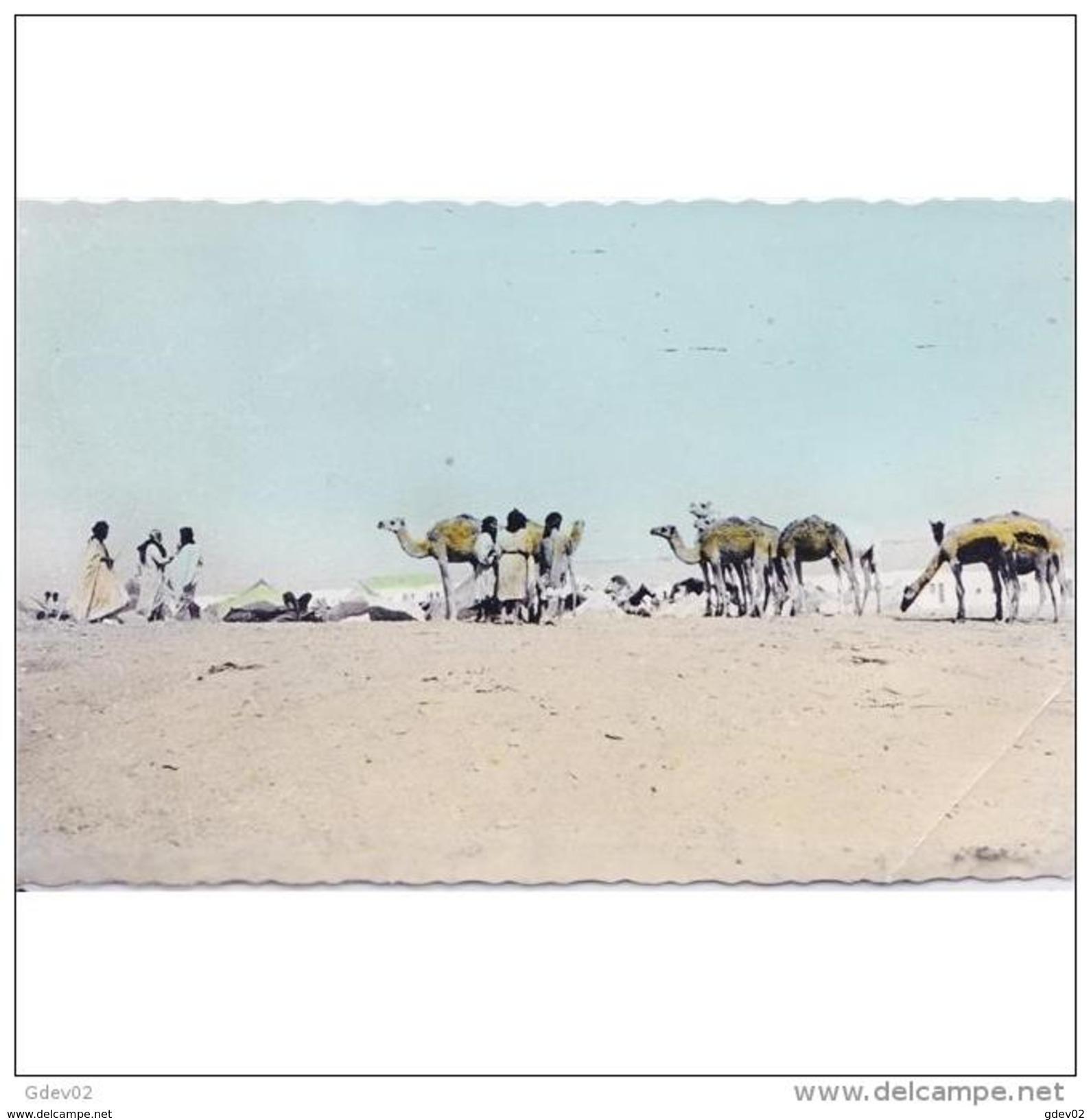 AFDNTP1055J-LFTMD12089TCME.TARJETA DE MARRUECOS.Mercado De Camellos En El  DESIERTO  DE  EL AIUM - Mercados