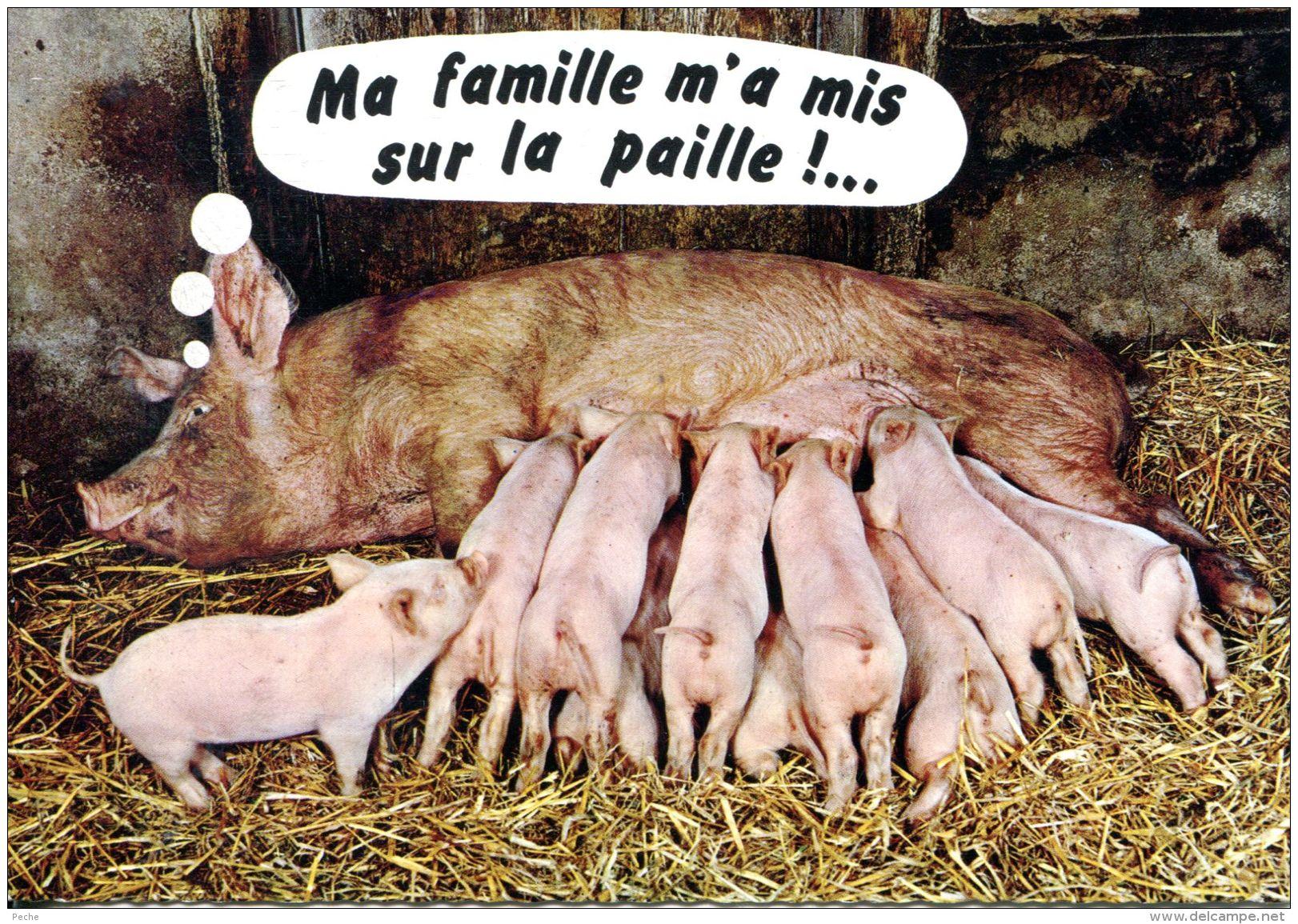 N°53604 -cpsm Cochons - Cochons