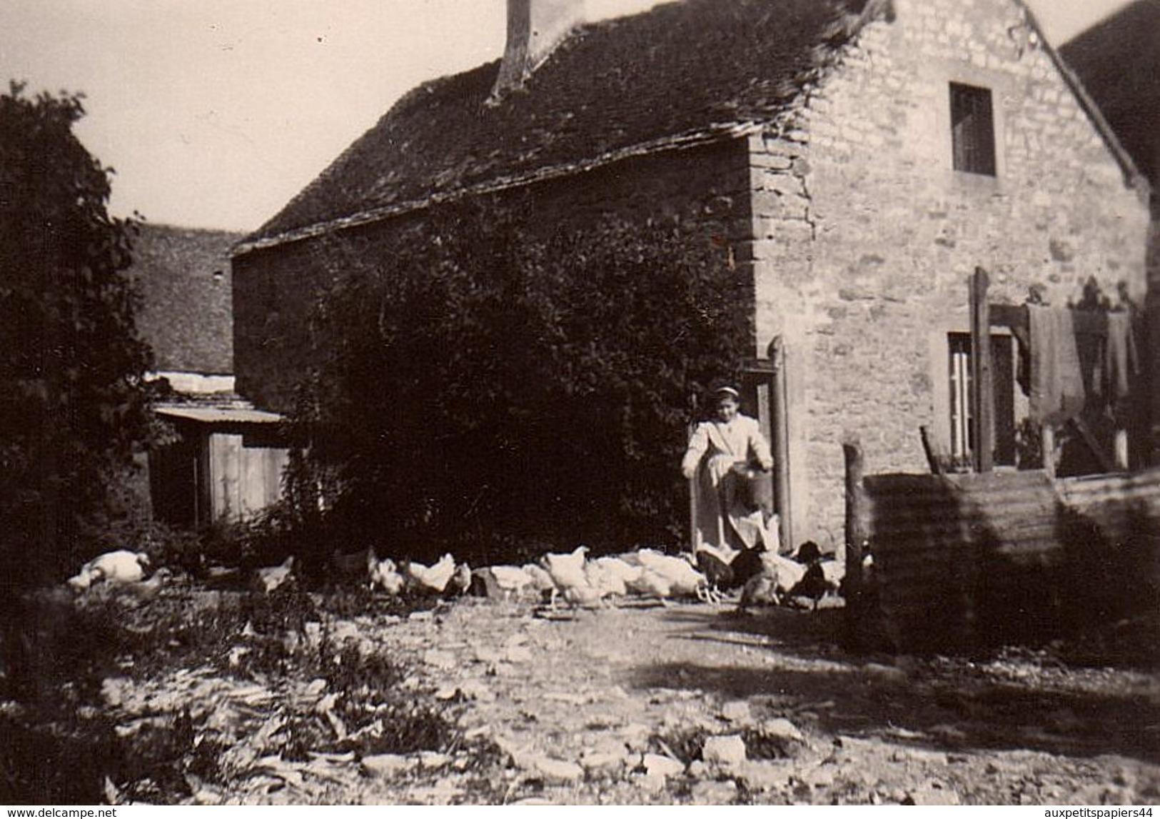Photo Originale Ferme & Fermiers, Paysans, Jeune Femme Distribuant La Nourriture Aux Poules - Basse-cour & Volaille - Professions