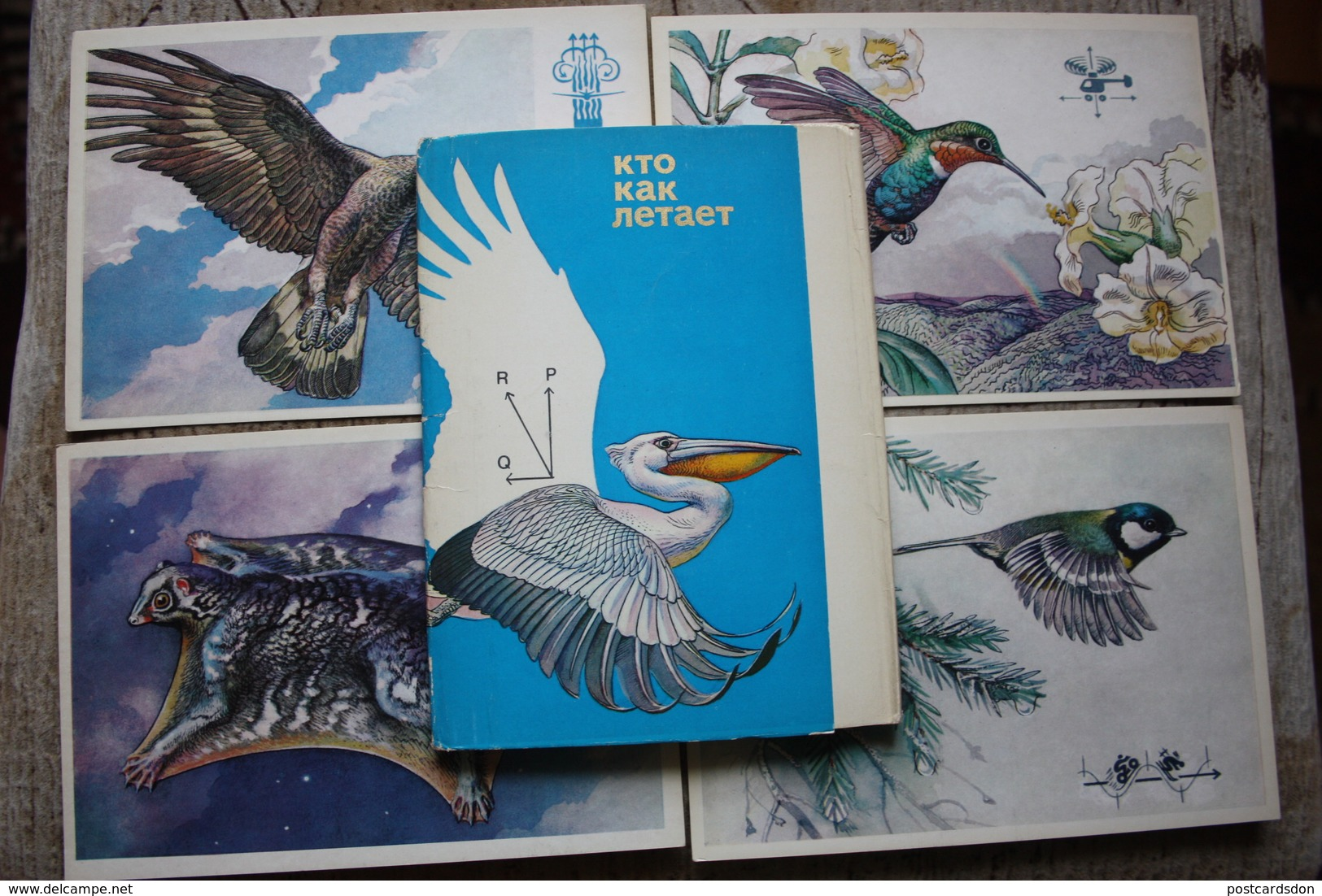 How Birds And Others Fly  - Tit - Hummingbird - Raven - Frog - Bat - 12 PCs - Old USSR Postcard 1977 - Oiseaux