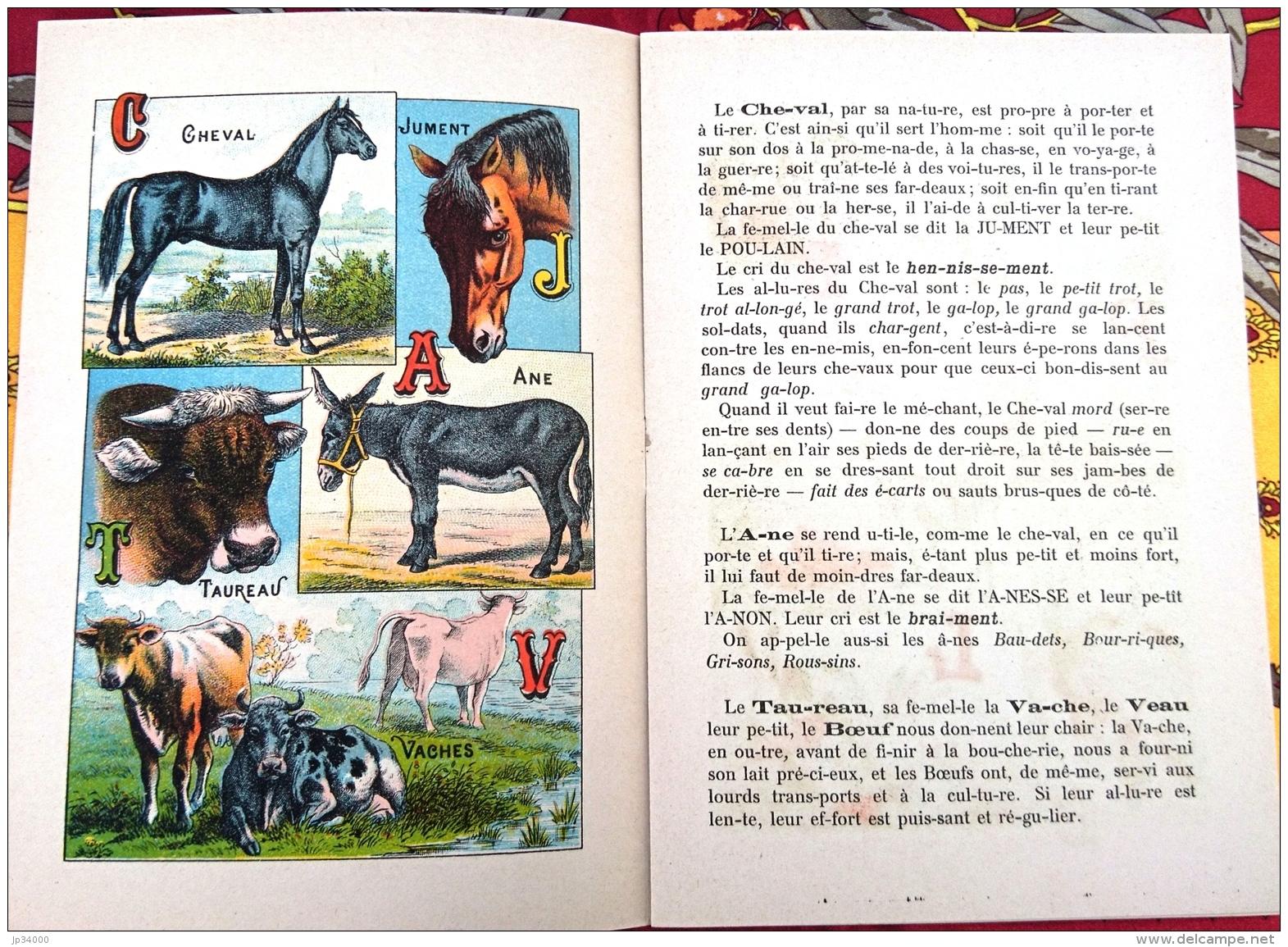 ALPHABET SYLLABAIRE DES ANIMAUX DOMESTIQUES Et De BASSE COUR. Série A. Images épinal - Animaux