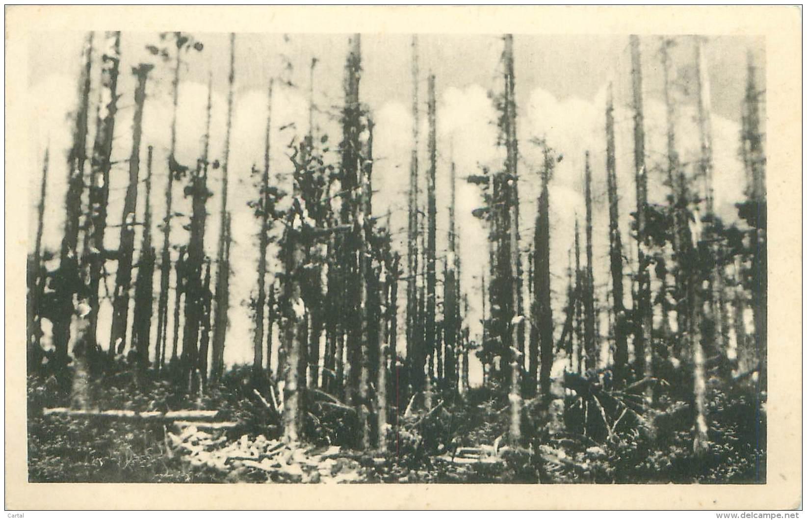 La Grande Pitié Des Forêts D'Ardenne - Non Classés