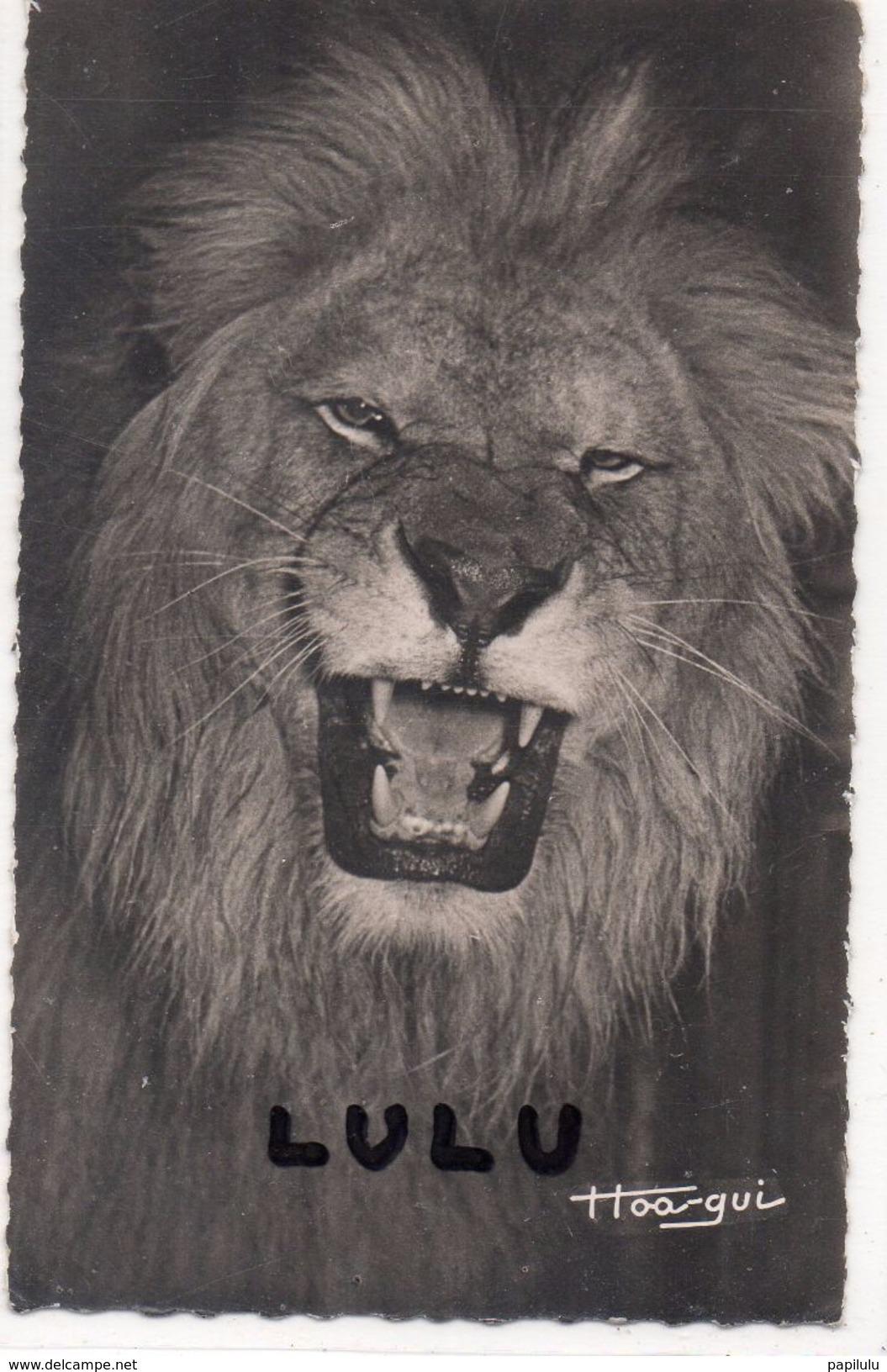 ANIMAUX : Faune Africaine , Le Lion ; Distributeur Librairie Au Messager  A Brazzaville édit. Hoa Qui N° 294 - Lions