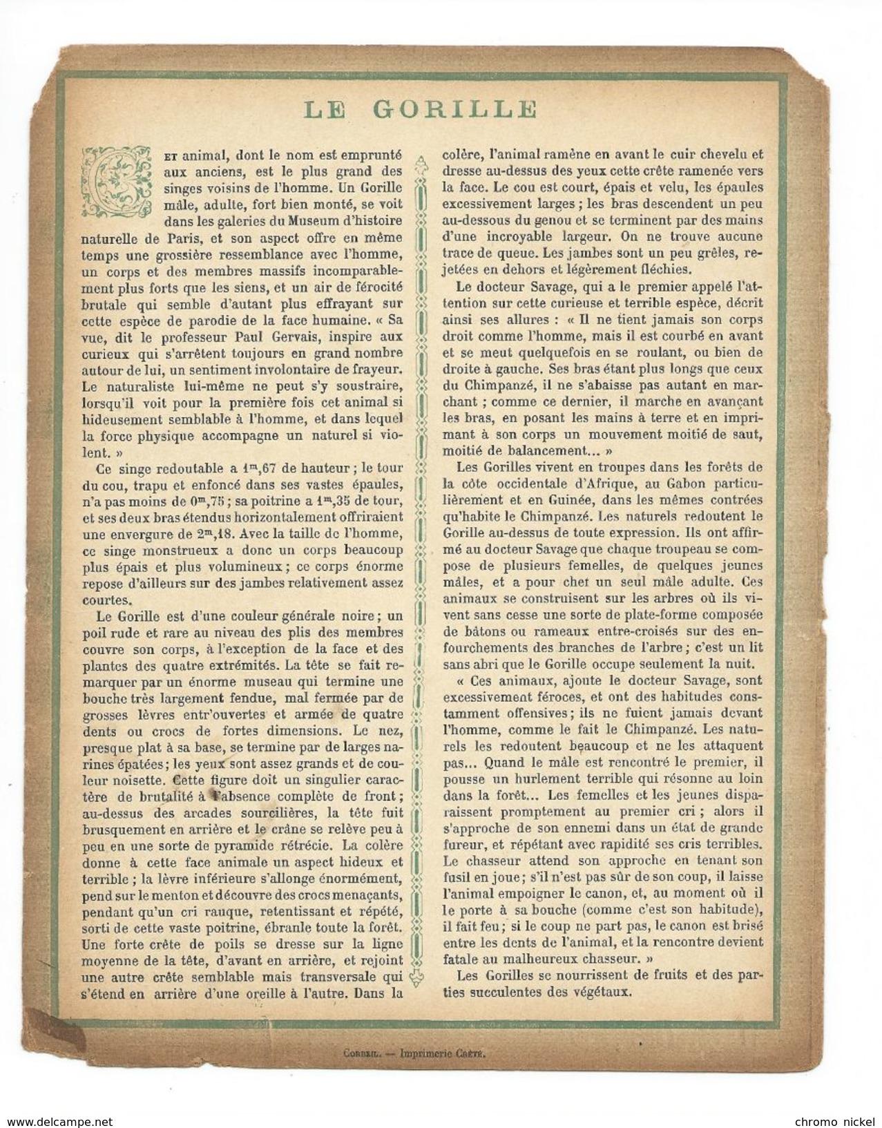 Gorille Singe Protège-cahier Couverture De Cahier Corbeil Crété Fin XIX  Didactique Au Dos. Etat Moyen Mais RR. - Animaux