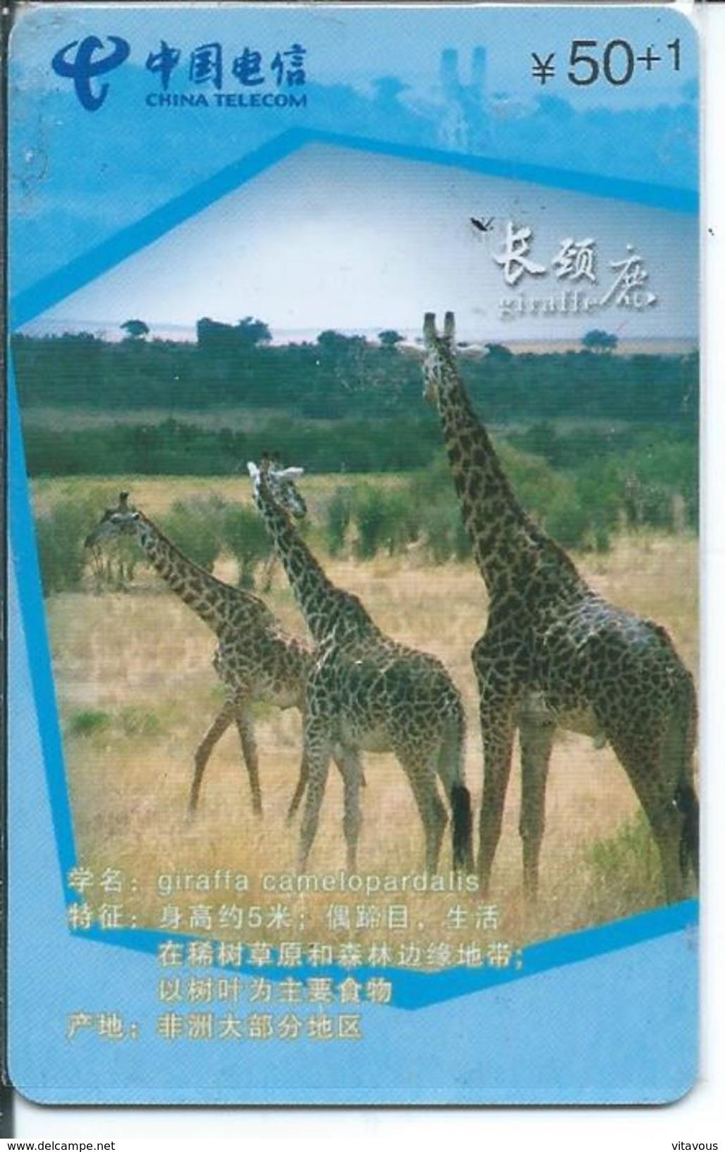 Girafe Giraffe Jungle Animal Télécarte Puce  Phonecard  Karte (S.270) - Jungle