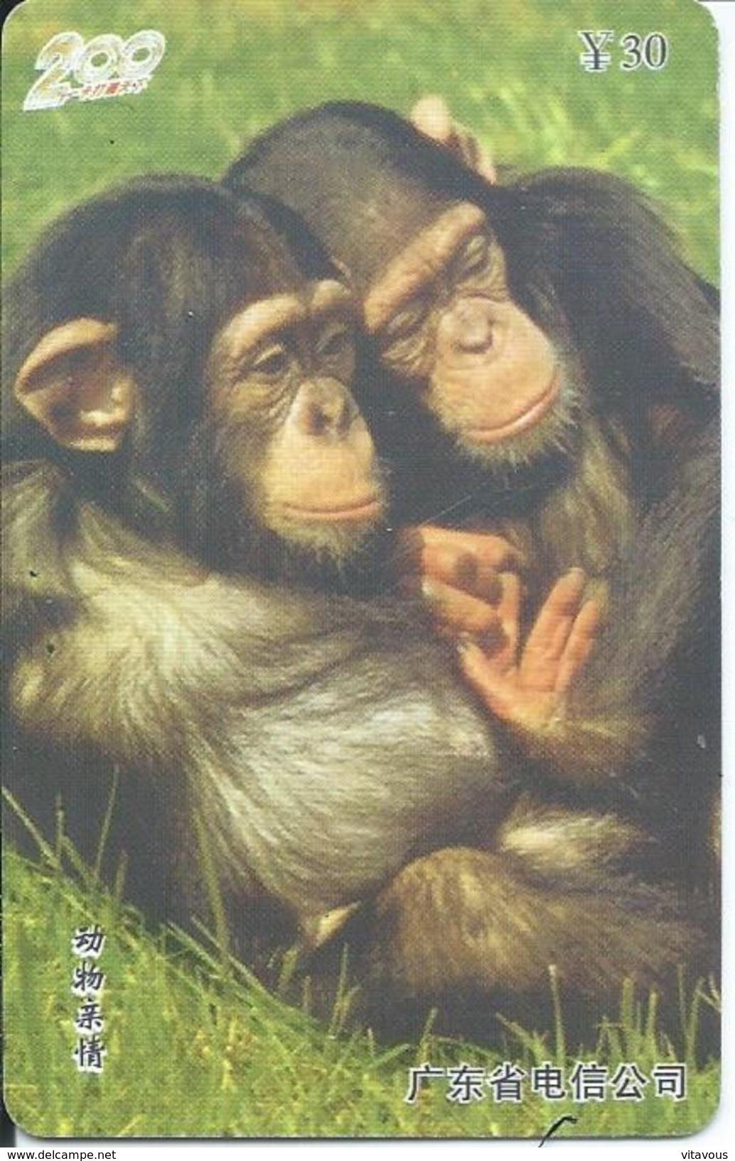 Singe Monkey Animal Jungle Télécarte Phonecard Telefonkarten (S399) - Jungle