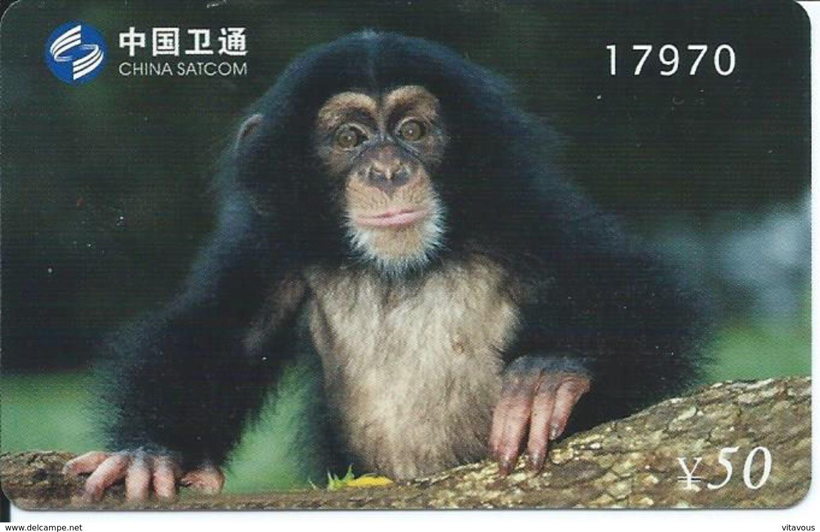 Singe Monkey Animal Jungle Télécarte Phonecard Telefonkarten (S.400) - Chine