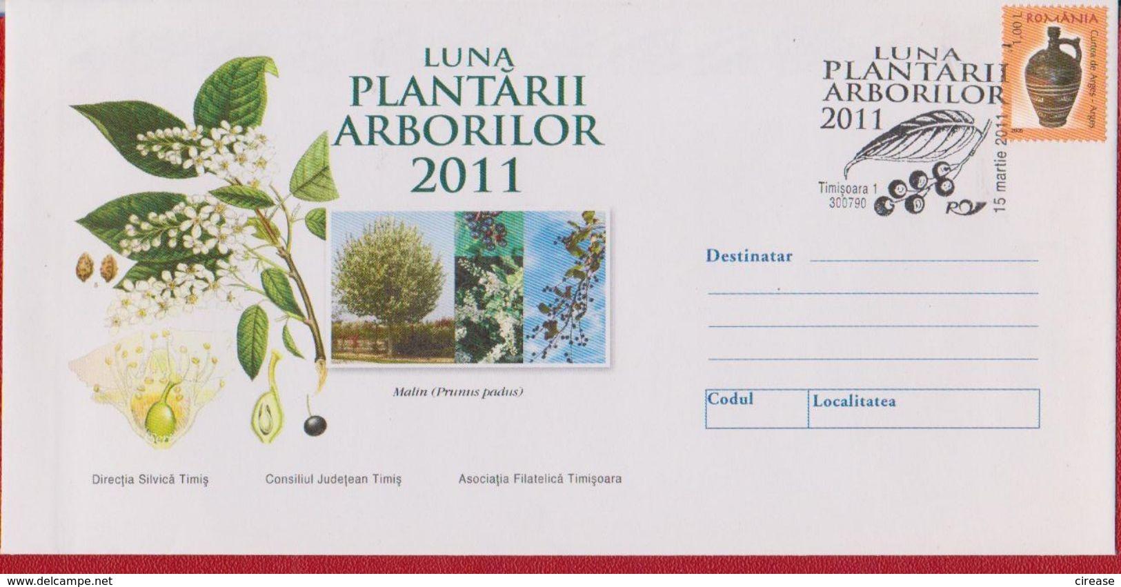 PLANTS TREES PRUNUS PADUS ROMANIA COVER - Bäume