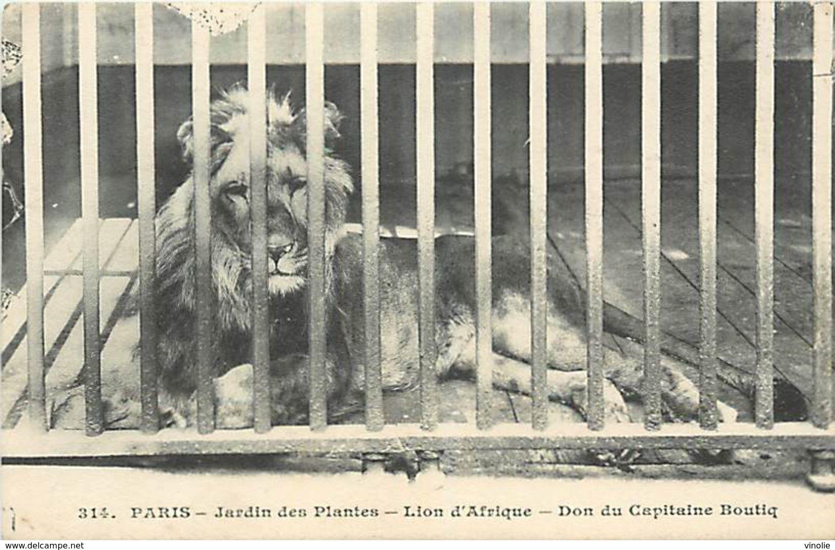 PIE 17-T-4554 : JARDIN DES PLANTES PARIS. LE LION D'AFRIQUE - Lions