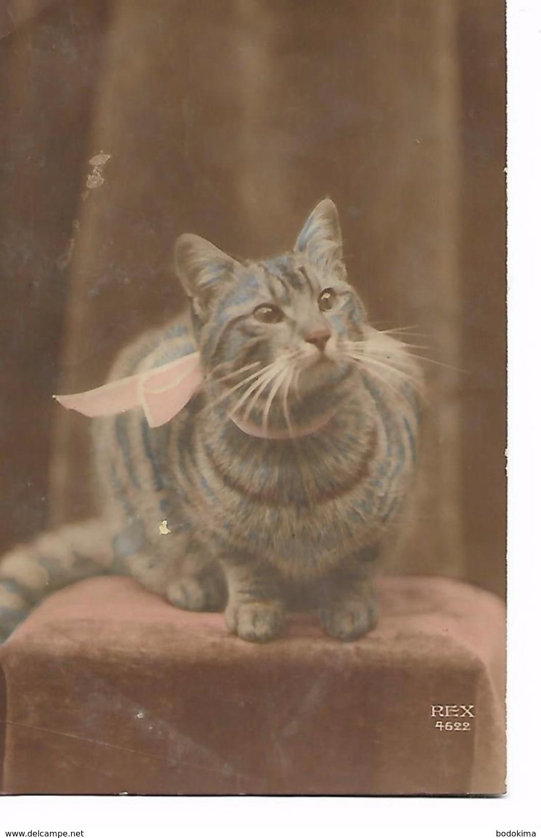 Chat   Tigrée  Avec  Ruban  Rose - Cats