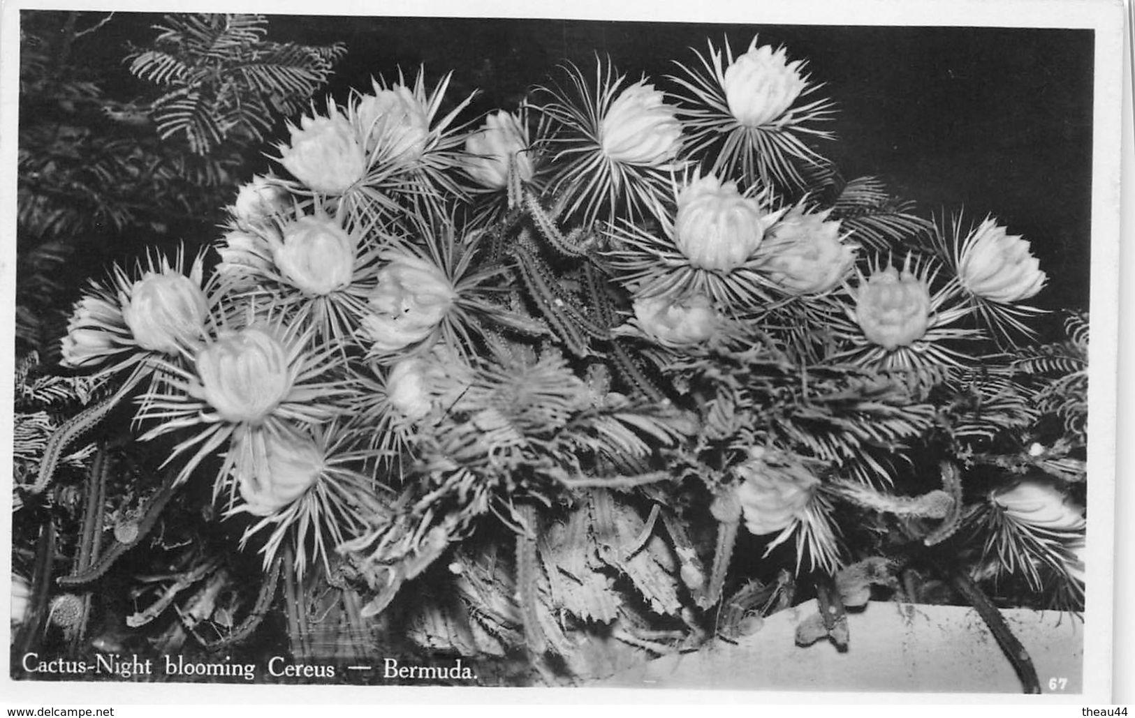 ¤¤  -  ANTILLES   -   BERMUDA   -  Cactus-Nigth Blooming Cereus  -  ¤¤ - Bermudes