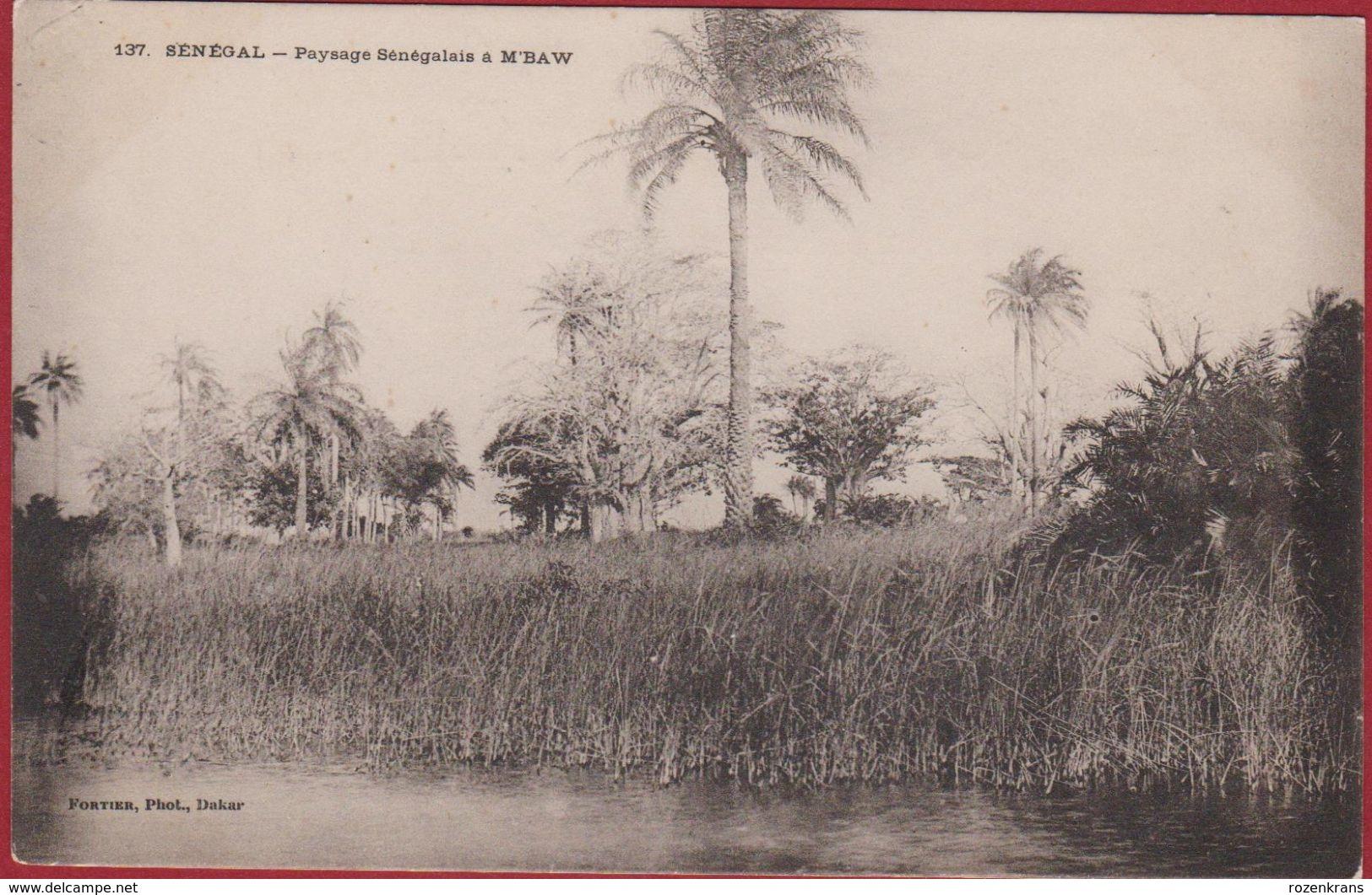 SENEGAL Paysage Senegalais A M'Baw Edit. Fortier Photo - Afrika Afrique Occidentale West Africa - Sénégal