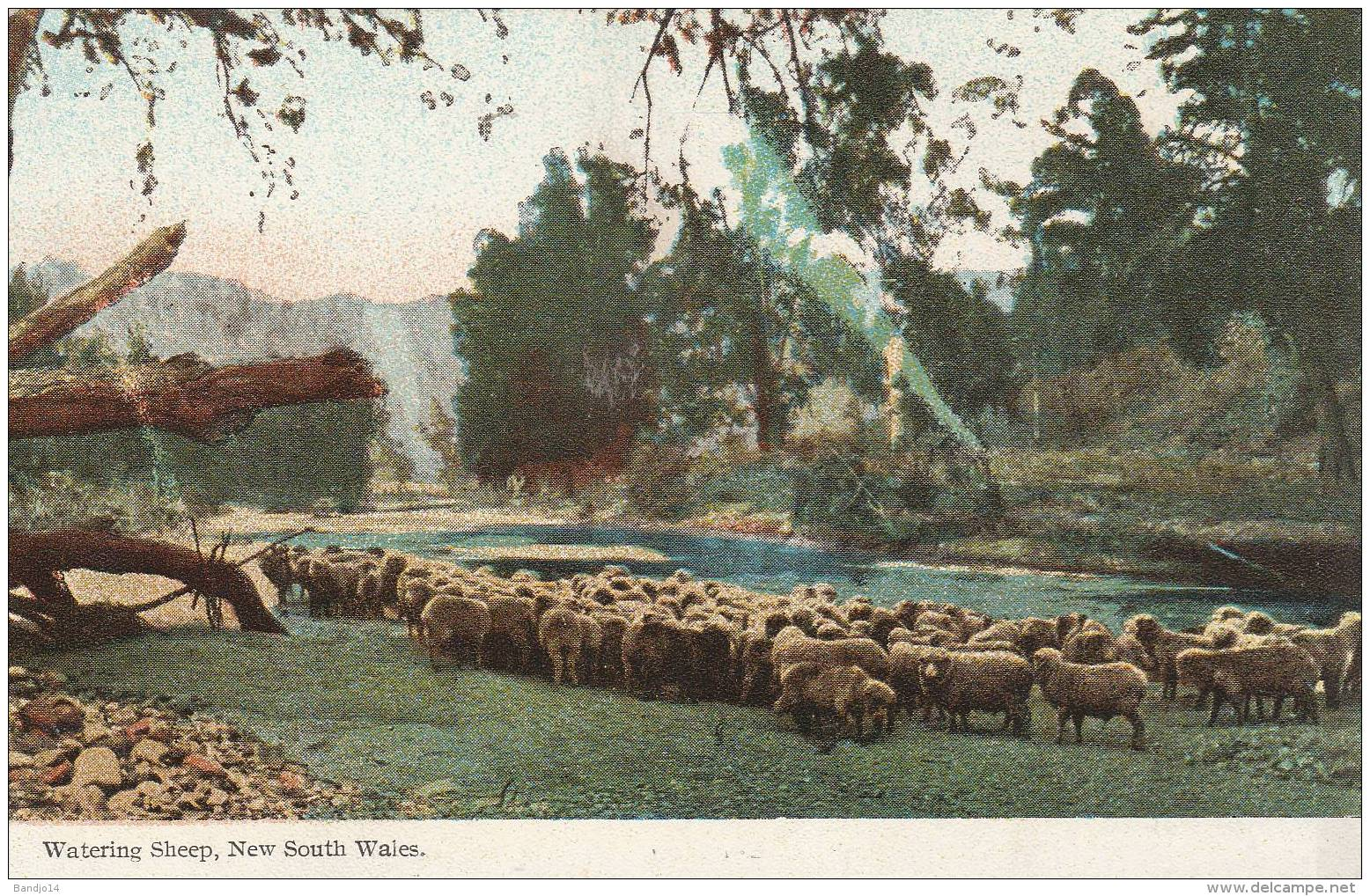 Watering Sheep , New South Wales  - 2 Scan - Autres