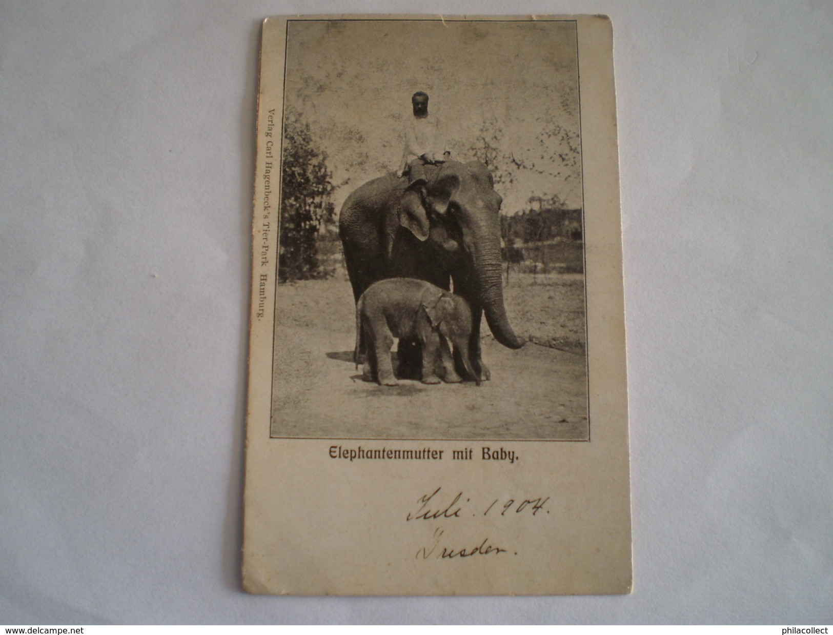 Hamburg // Tier Park Carl Hagenbeck // Elephantenmutter Mit Baby // Ca 1899 - Duitsland