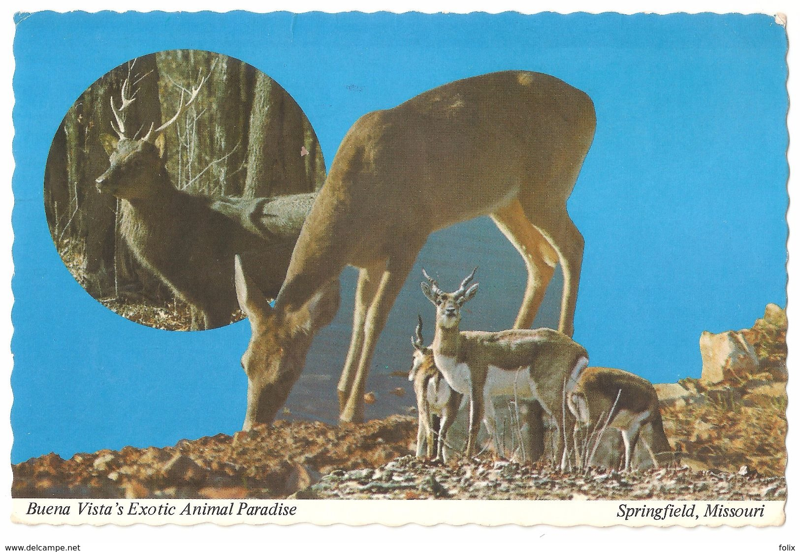 Springfield - Missouri - Buena Vista's Exotic Animal Paradise - Deer / Hert - Springfield – Missouri