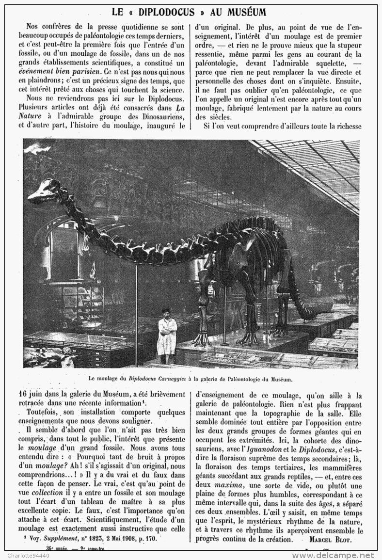 """LE """" DIPLODOCUS """"  Du MUSEUM D'HISTOIRE  NATURELLE De PARIS 1908 - Fossils"""