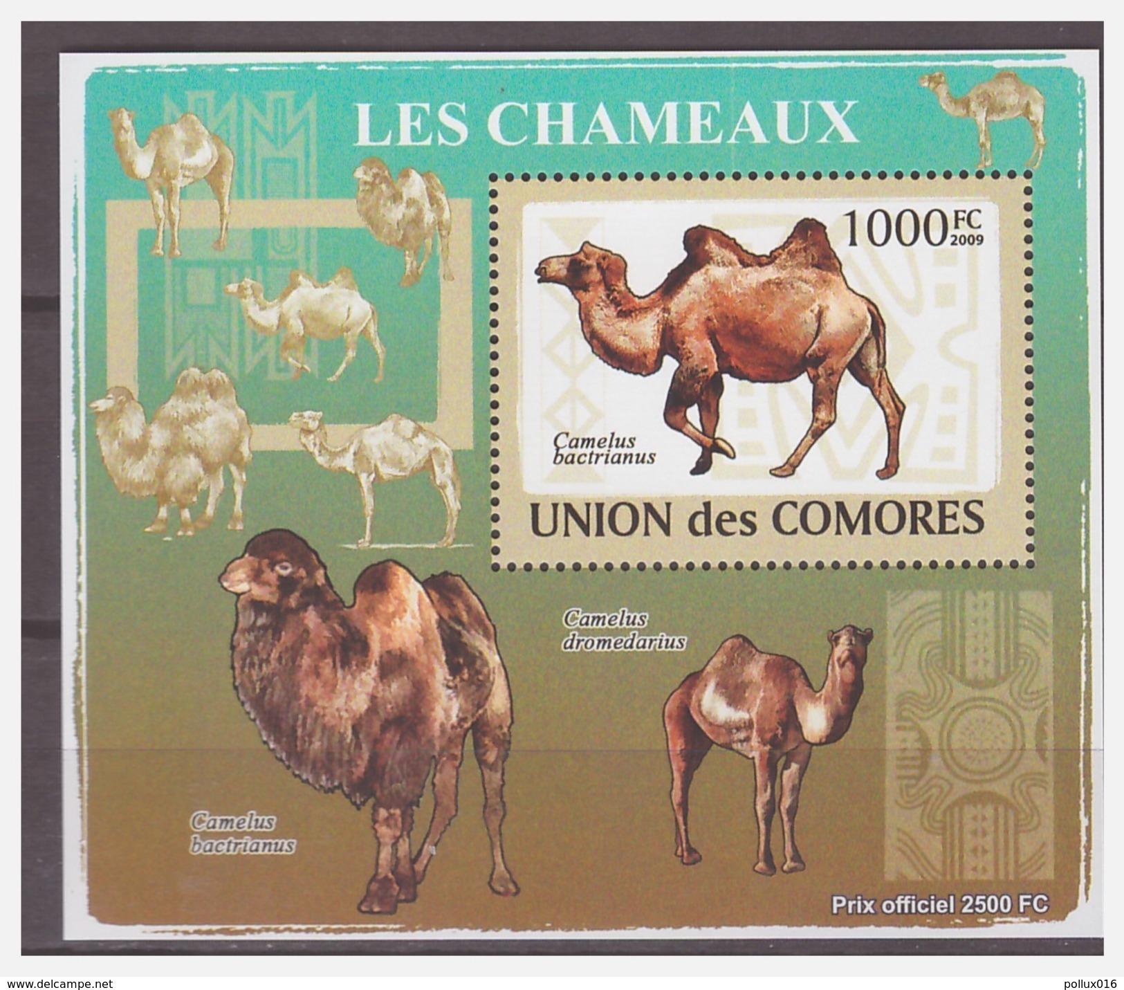 0193 Comores 2009 Kameel Camel S/S MNH - Autres